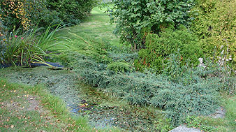 Before - overgrown leaking concrete pond