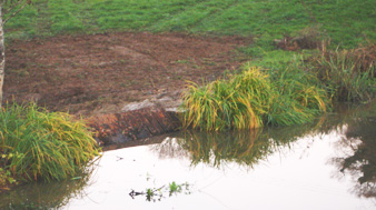 After - well established carex coir pallets were pinned to the bank to hold it all together